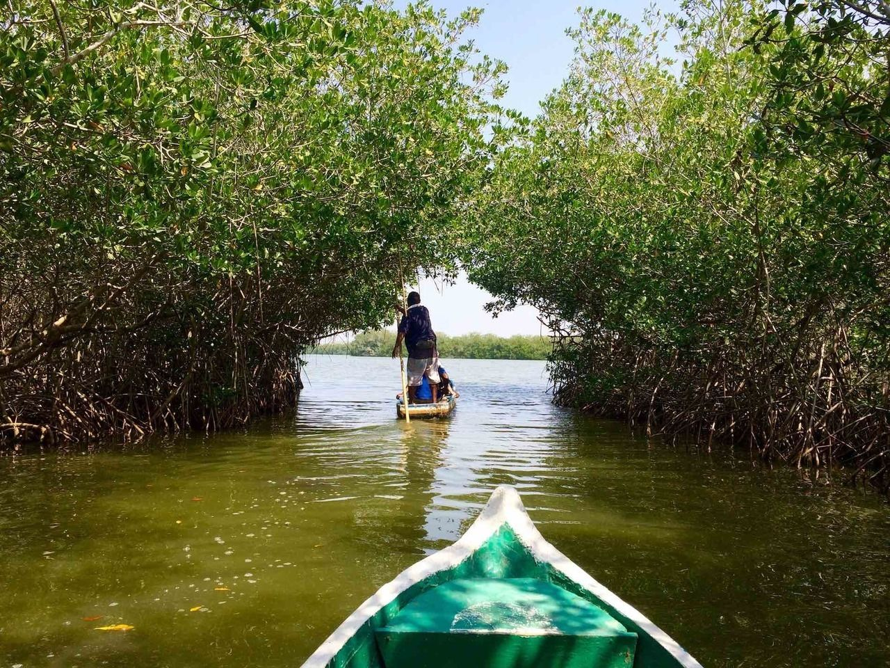 que faire a carthagene, mangroves Cienaga