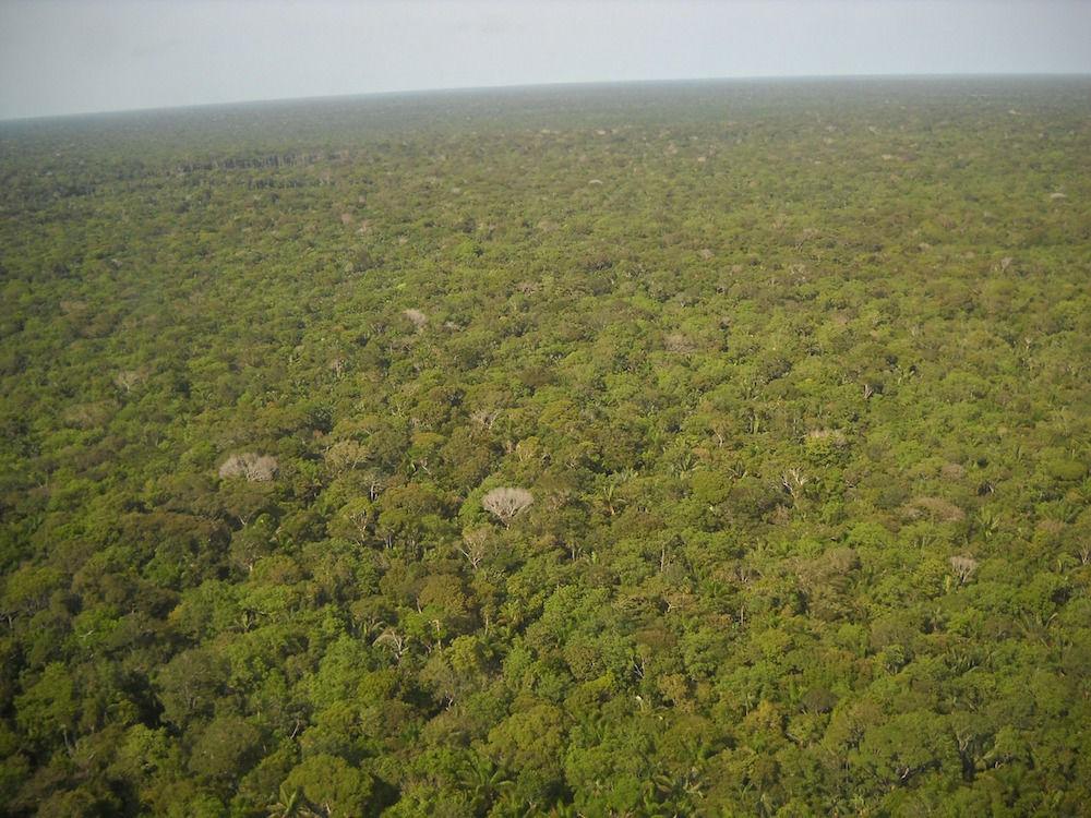 """Vue depuis l'avion de """"l'océan d'arbres"""""""