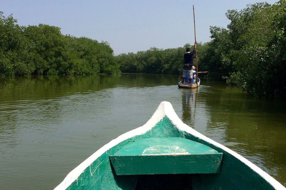 voyage a cartagena, mangrove, boquilla